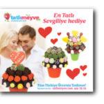 tatlimeyve-blog-8